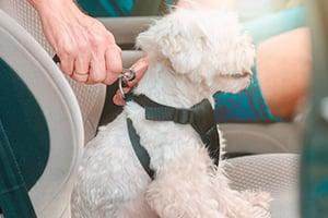 10 Summer Pet Travel Tips - Dog Care Harness