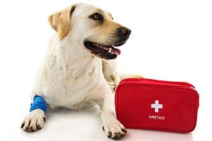 10 Summer Pet Travel Tips - Pet First Aid