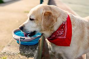 10 Summer Pet Travel Tips - Bring Water