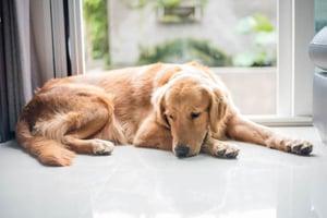 Calming Stressed Dog 3