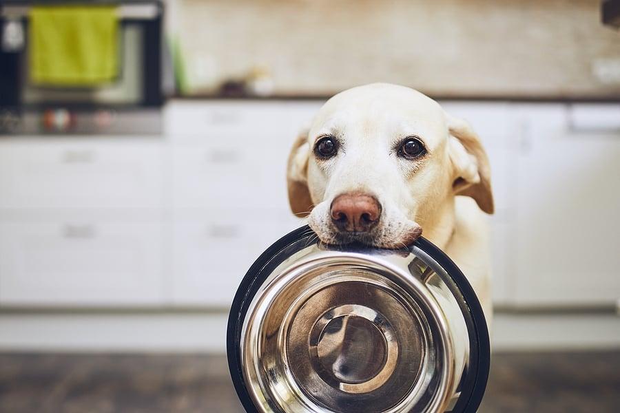 Hungry-Dog-With-Sad-Eyes-Is-Wa-308861899