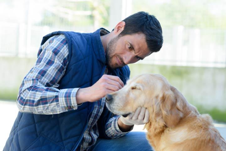 Man Cleaning Dog Ear