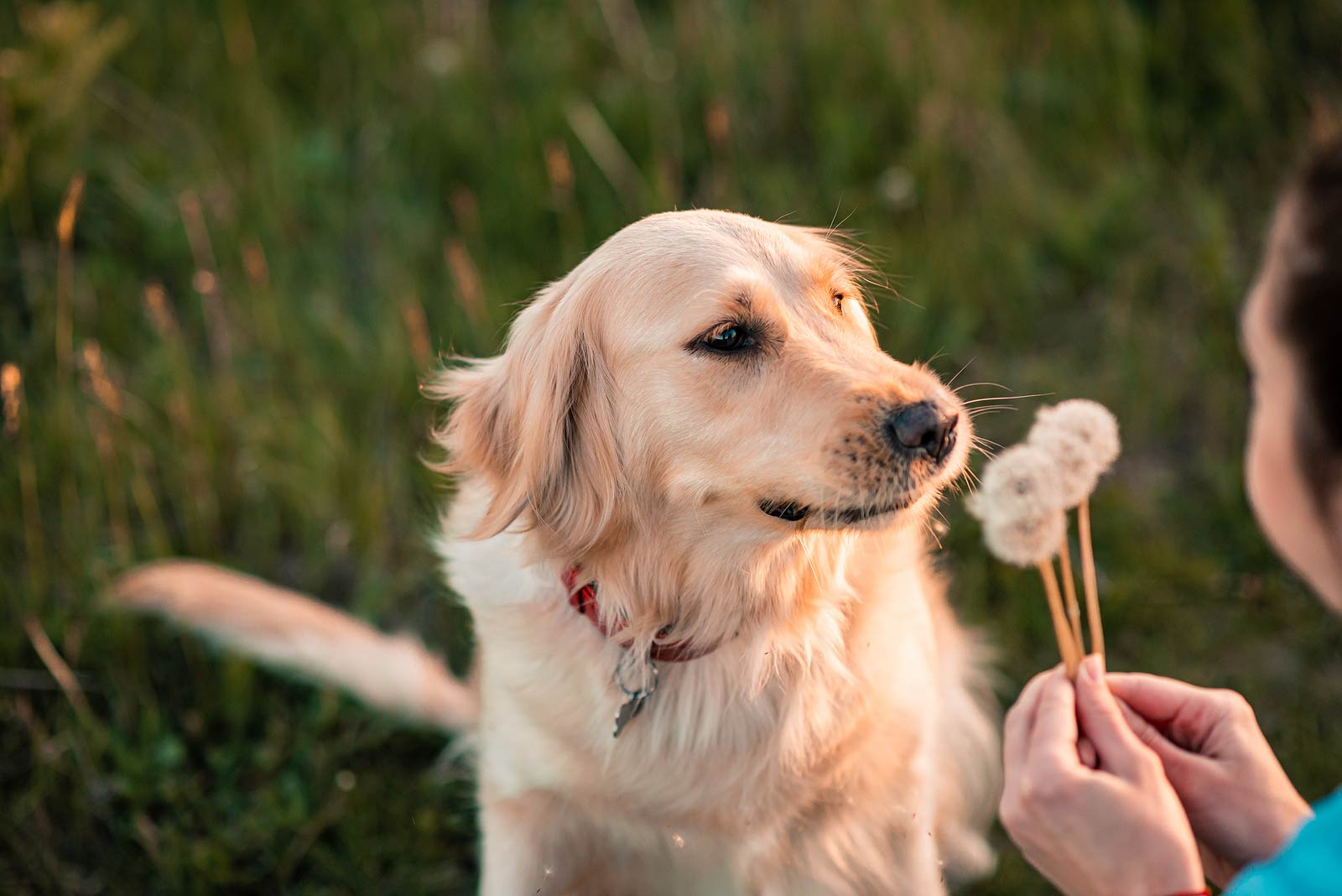NaturVet Understanding Dog Cancer