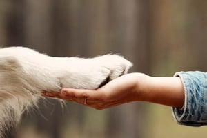Understanding Dog Cancer - Dog Handshake