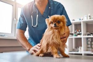 Vet Checking Dog Leaking Urine 2 HSFP