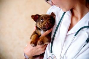 Vet Helps Stressed Dog
