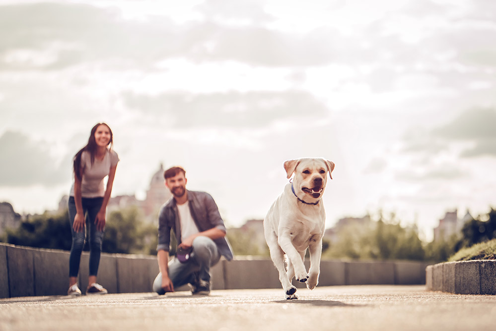 bigstock-Couple-On-A-Walk-With-Dog-205048642