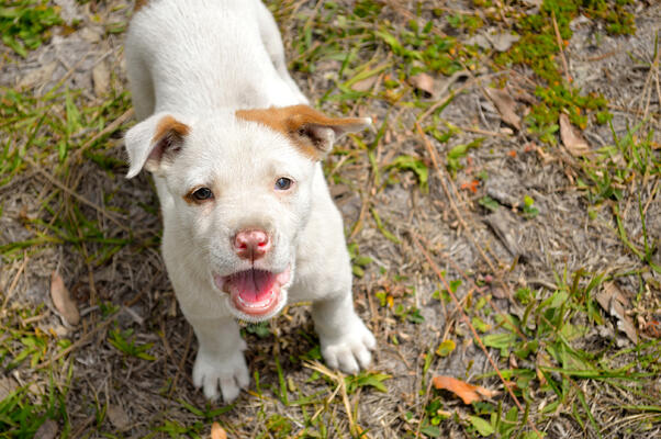 how to get your dog to stop barking, barking dog