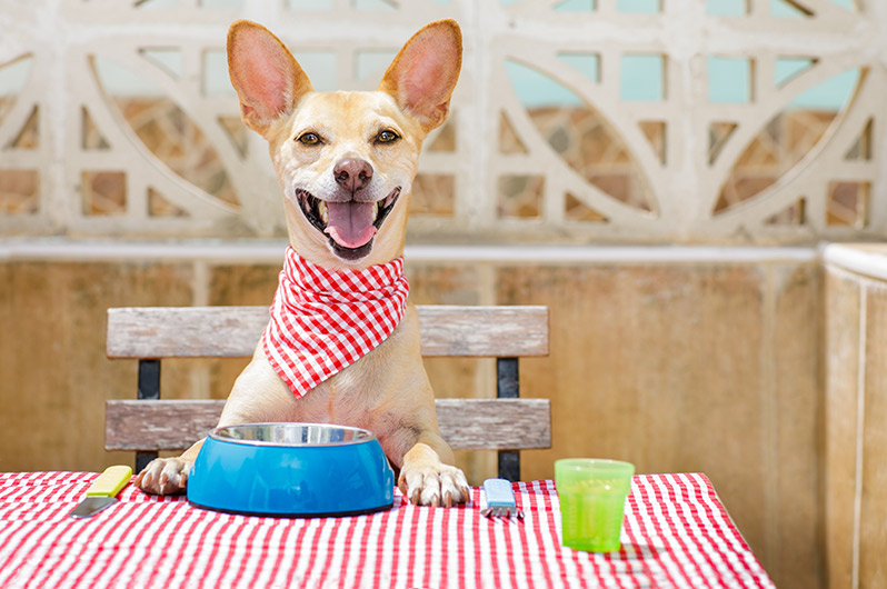 bigstock-Dog-Eating-A-The-Table-With-Fo-184879354