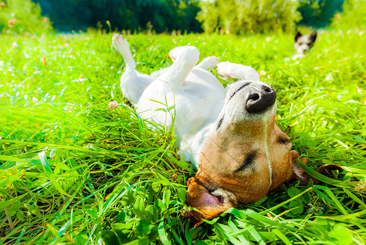 bigstock-Dog-Siesta-At-Park-142905245