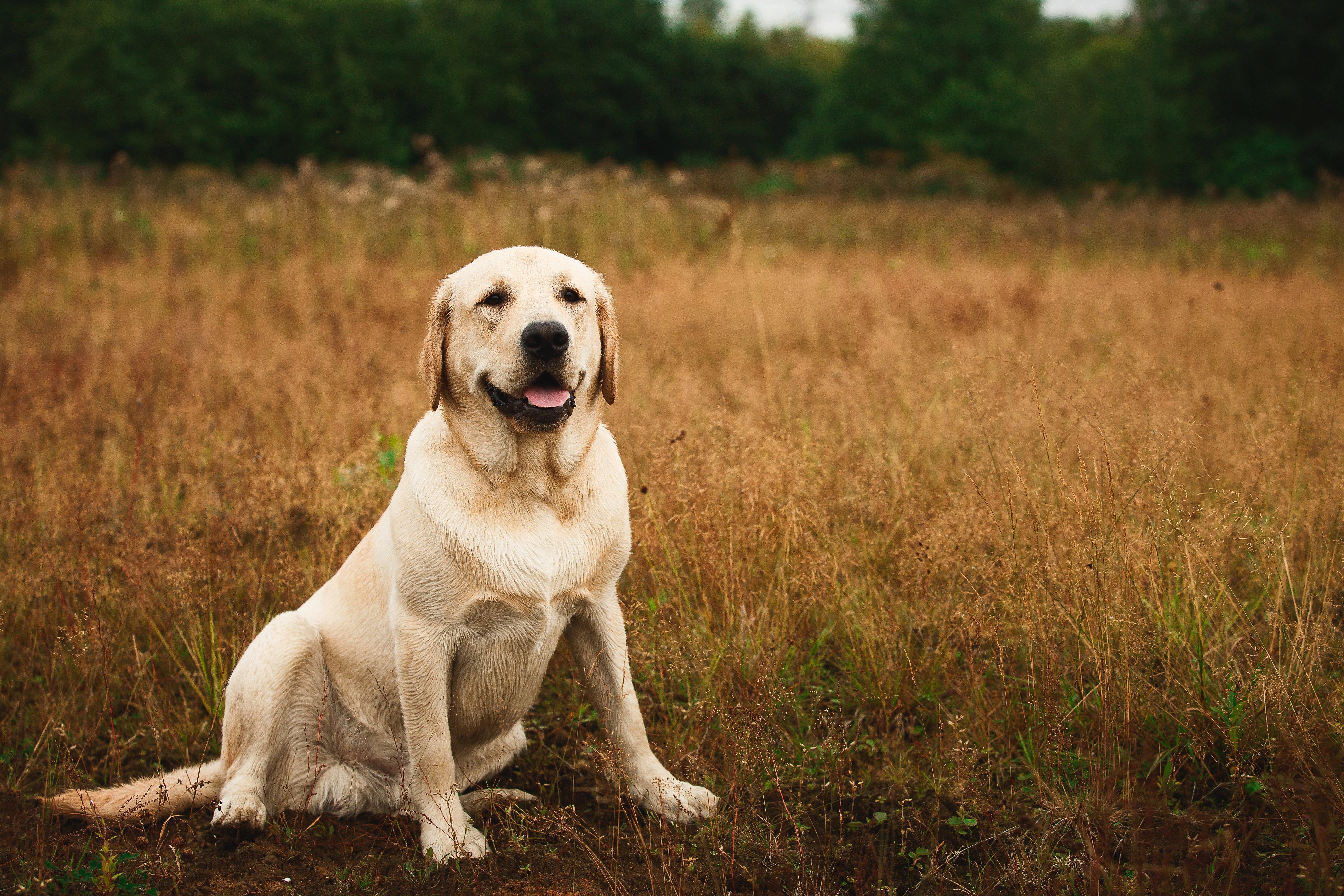 bigstock-Dog-Sitting-In-Tranquil-Field-210873283