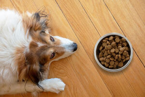 Tips for Dog's Smelly Gas - Dog with Food