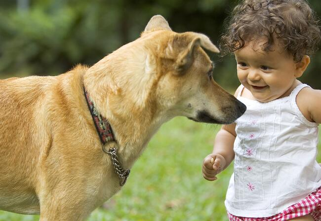 bigstock-Infant-And-Dog-27731