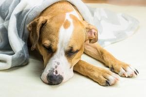 bigstock-Lazy-Or-Sick-Pet-Dog-Relaxing--232234681