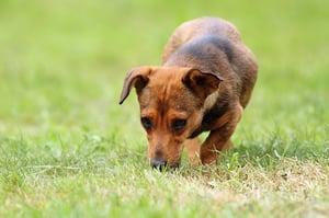 bigstock-Mongrel-Dog-In-The-Field-78295994