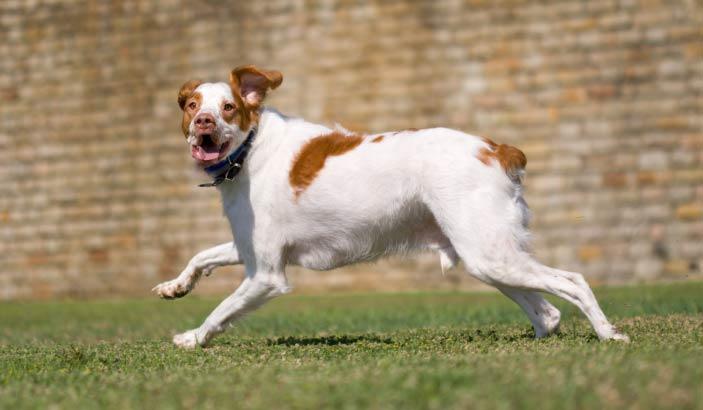 bigstock-Running-Dog-1500031 (reduced)