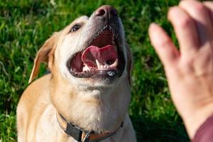 bigstock-Sunstroke-Health-Of-Pets-In-T-265421071 (reduced)-1
