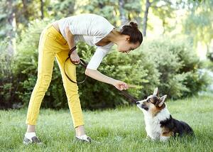 bigstock-Welsh-Corgi-Dog-Being-Punished-310790179 (reduced)-1
