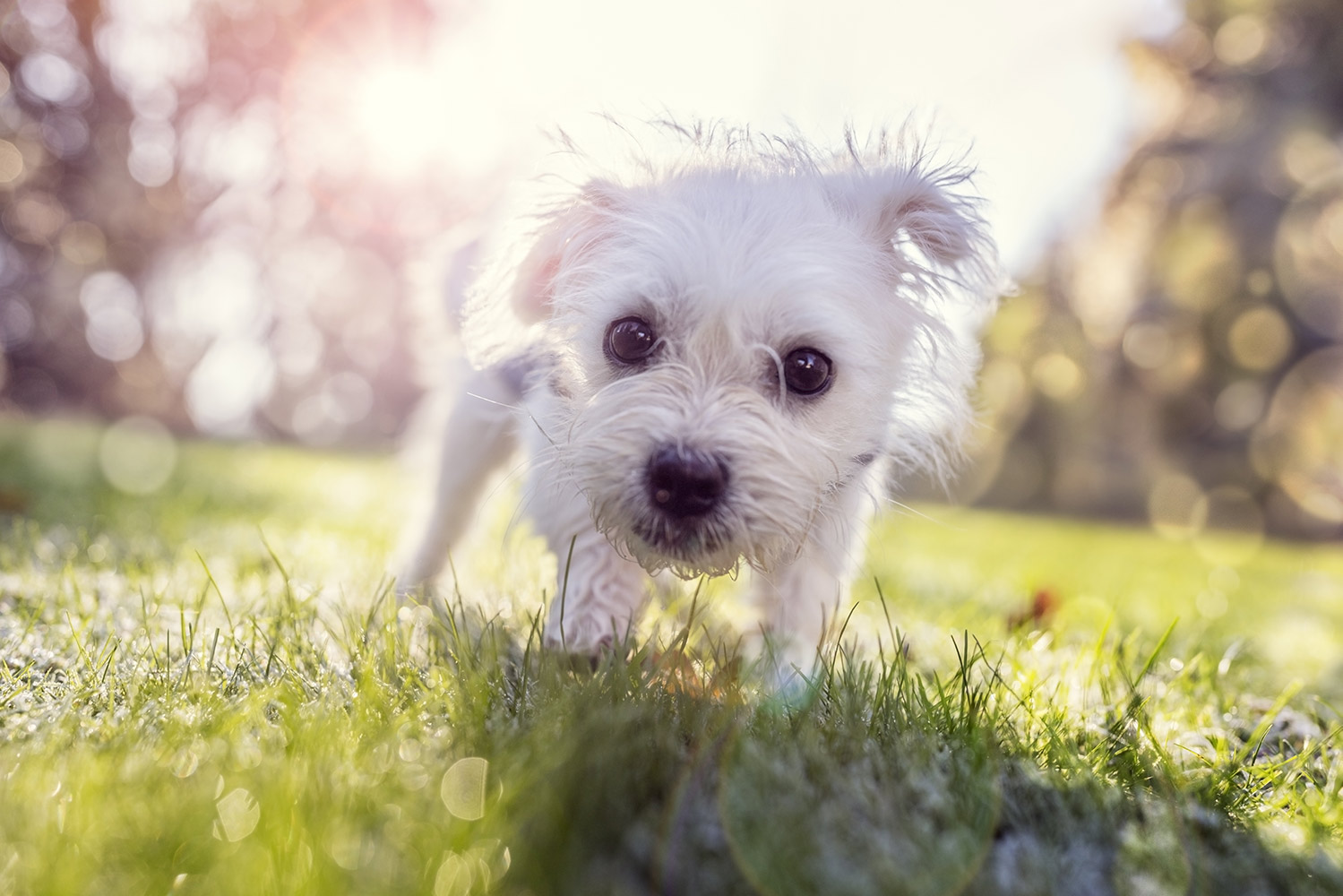 bigstock-Young-puppy-outside-walking-in-169197296