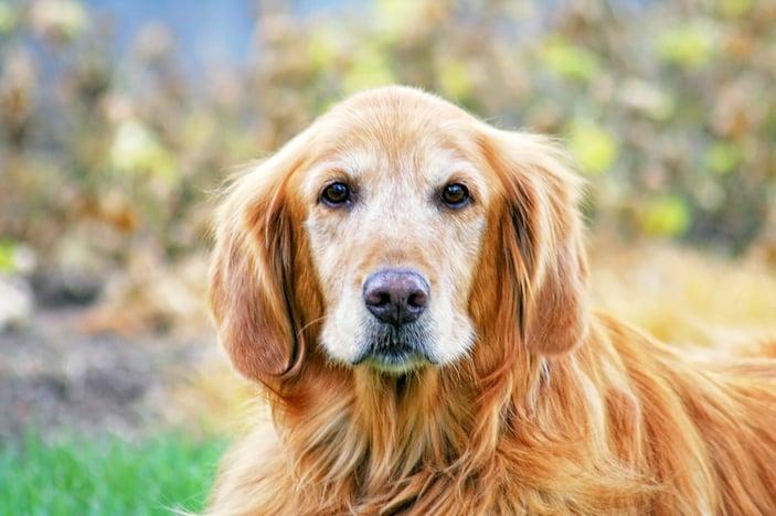 bigstock-a-cute-dog-in-the-grass-at-a-p-59753168