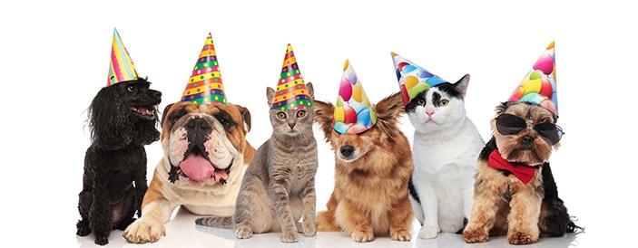 bigstock-six-adorable-birthday-pets-with-colorfu-703X275