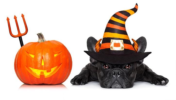 bigstock-Halloween-Dog-Banner-151223072