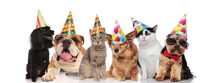 bigstock-six-adorable-birthday-pets-with-colorfu-703X275